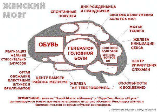 zhenskiy-mozg.jpg